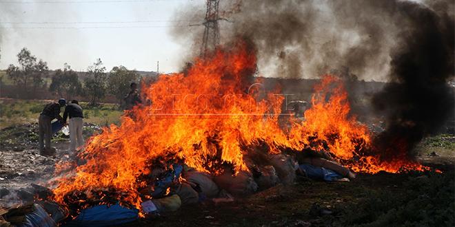 Safi: Incinération de 4,6 tonnes de drogue