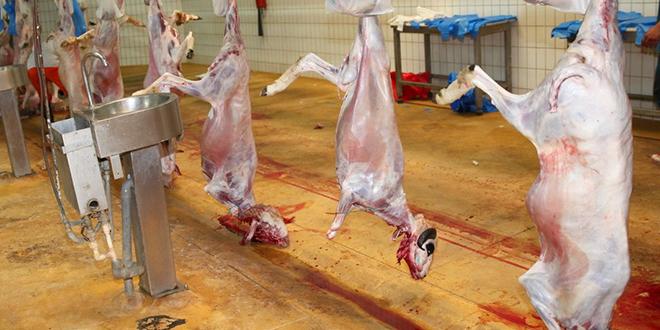 Casablanca : Voici le prix pour l'abattage du mouton de l'Aïd Al-Adha