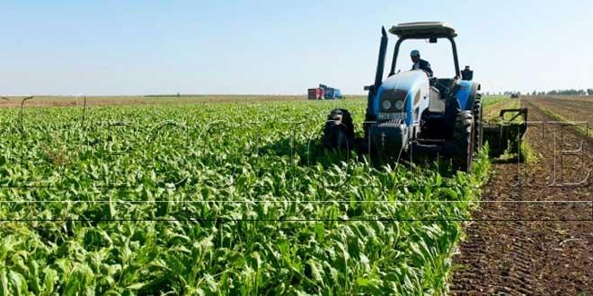 Casablanca-Settat : La DRA rassure sur la campagne agricole