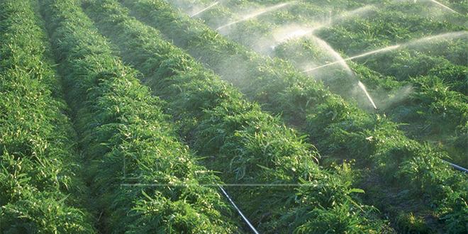 Campagne agricole : Les indicateurs au vert