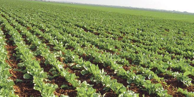 Agriculture: L'OCP et l'ITFC main dans la main