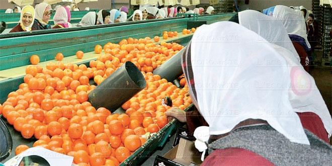 Rabat-Salé-Kénitra: Une campagne agrumicole exceptionnelle
