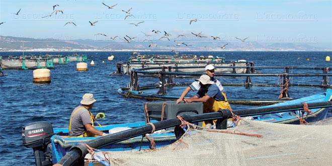 Aquaculture: 25 millions de DH pour booster le secteur
