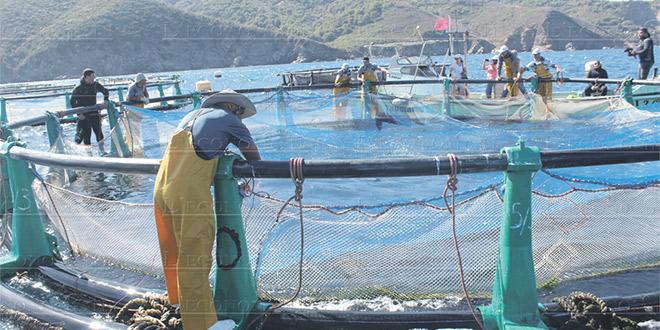 Aquaculture: Plus de 250 projets lancés, dont 80% à Dakhla
