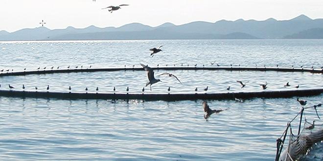 Aquaculture : Enfin des projets lancés au Souss-Massa