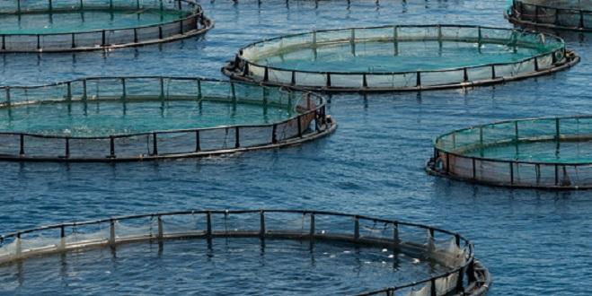 Aquaculture : L'ANDA toujours en attente de projets dans le Nord