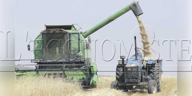 Campagne agricole: La bonne moisson se confirme
