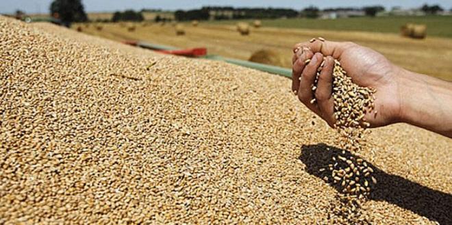 Céréales: 4,5 mois d'approvisionnement assurés