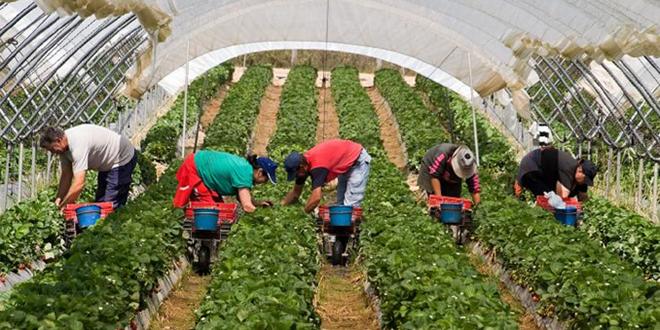 L'Espagne fait appel à 11.000 ouvrières agricoles marocaines