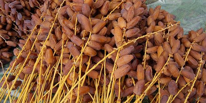 Dattes : La production impactée dans le Draâ-Tafilalet