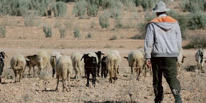 Sécheresse: Nouvel appui aux éleveurs impactés