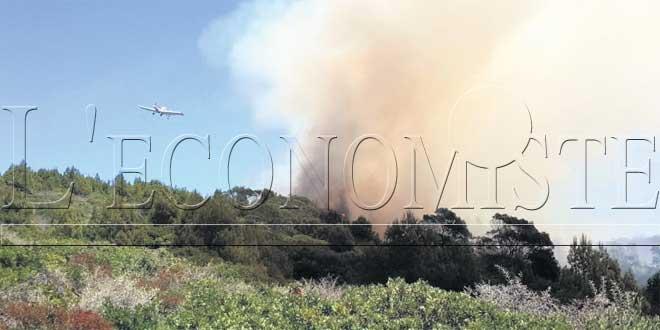 Incendies de forêt : Les travaux démarreront cette année