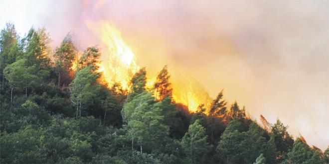 Feux de forêt : Ce qui a été brûlé