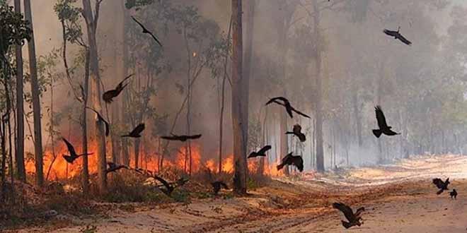 Le bilan des incendies en Australie s'alourdit