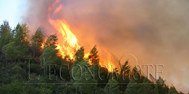 Nord: Au moins 50 ha de forêt détruits par un incendie