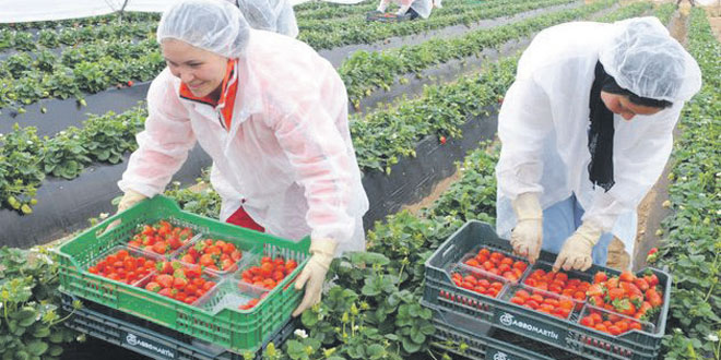 Fruits rouges : 9.000 hectares pour 2019-2020