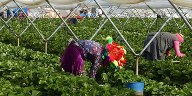 7.100 saisonnières marocaines rapatriées d'Espagne