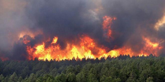 France : Un violent incendie ravage la forêt du sud-est