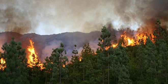 Tanger : L'incendie de la forêt fait plusieurs dégâts