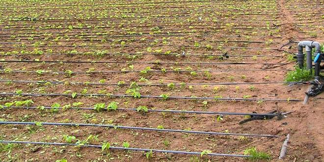 Agriculture : Deux projets lancés à Oujda