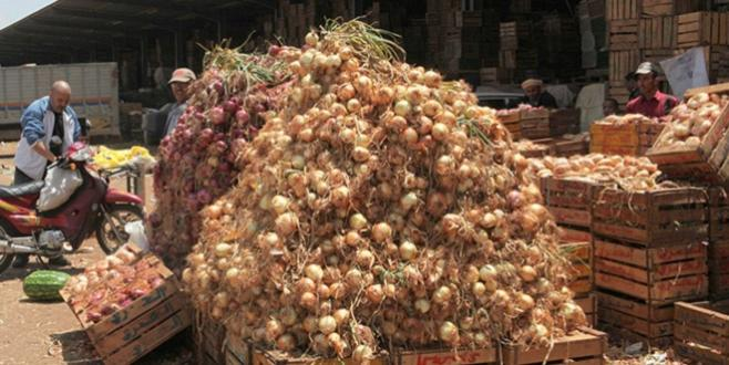 Oignons : Fès-Meknès confirme son statut