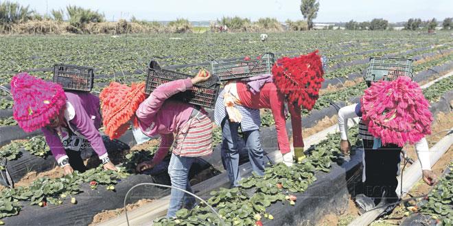 Coronavirus bloque plus de 9.000 saisonnières de regagner les champs d'Huelva
