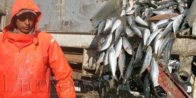 Pêche: Les débarquements reculent, la valeur aussi