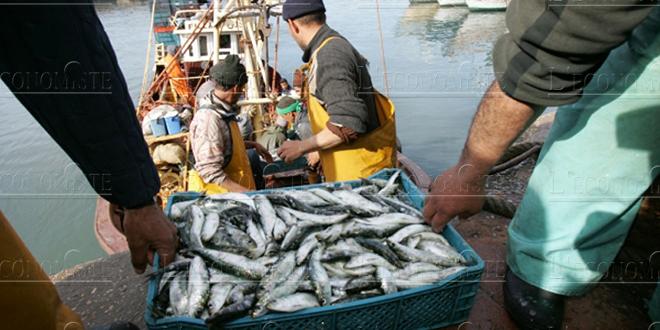 Pêche : L'activité baisse, pas la valeur