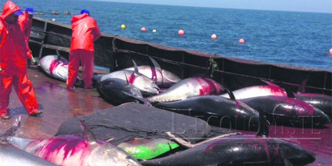 Maroc-UE : L'accord de pêche signé
