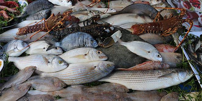 Pêche : Hausse de 10 des recettes au 1er trimestre