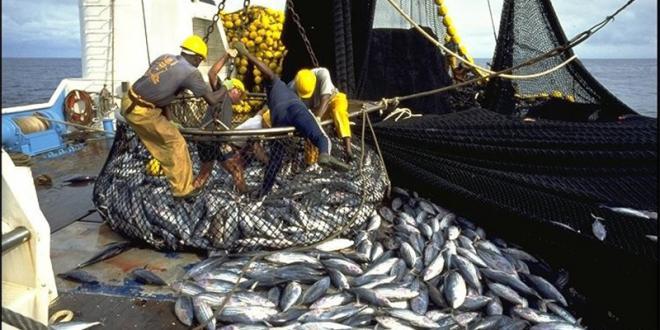 Produits halieutiques : Pourquoi le Maroc peine dans le Golfe