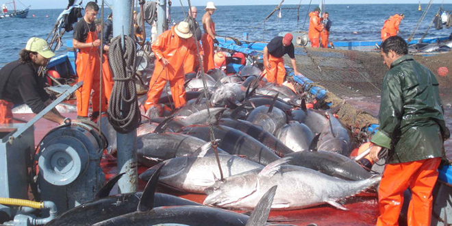 Maroc-UE : Bruxelles négociera un nouvel accord de pêche
