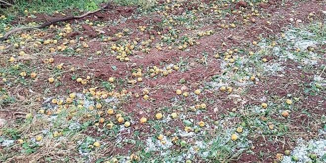 Tempête de grêle: Des mesures pour les agriculteurs impactés