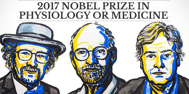 Voici les lauréats du Nobel de médecine