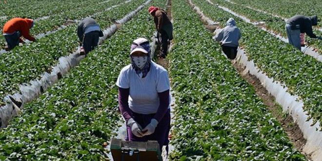 Ouvrières marocaines en Espagne: L'emploi à tout prix?