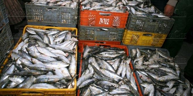 Pêche : Un nouveau système de pesage des captures