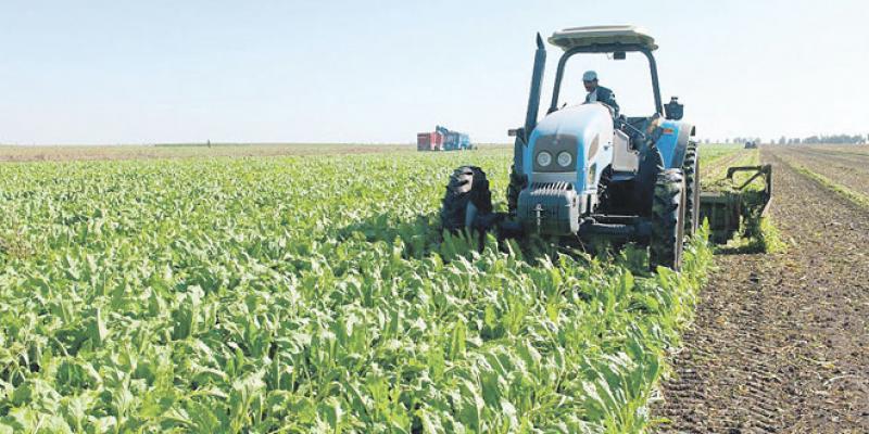 Vague de froid: Le monde agricole optimiste malgré tout