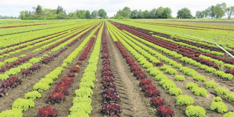 La résilience du monde agricole face à la crise Covid
