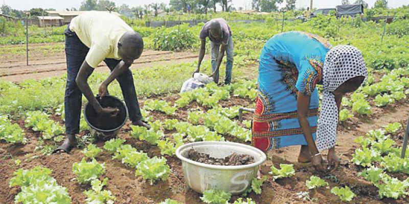 Economie responsable: Des premiers pas en Afrique