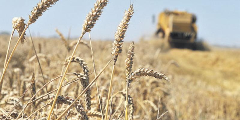 Perspectives agricoles: Les grandes tendances pour la décennie à venir