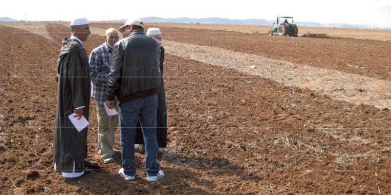L'agrobusiness en panne dans l'Oriental
