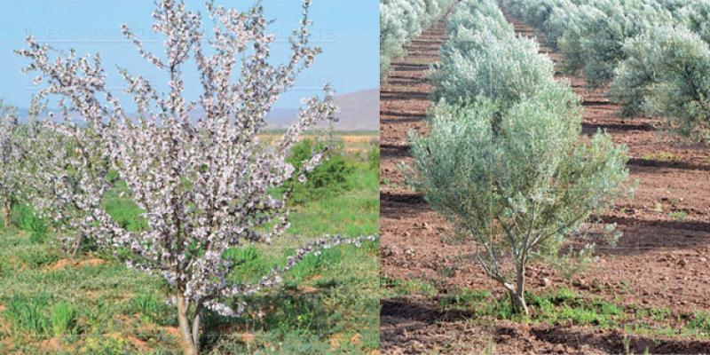 Jerada: Un programme pour relancer l'agriculture