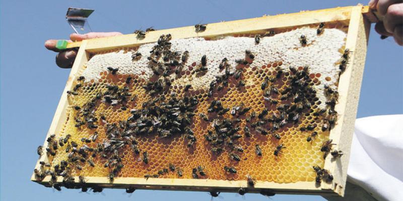 Produits du terroir: Comment Rabat est devenue le fief du miel