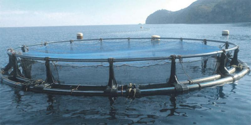 Une série de formations dans l'aquaculture