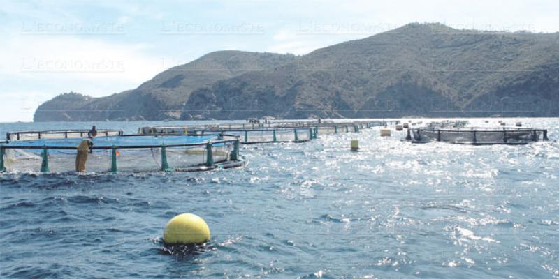 Dakhla, future grande plateforme de l'aquaculture