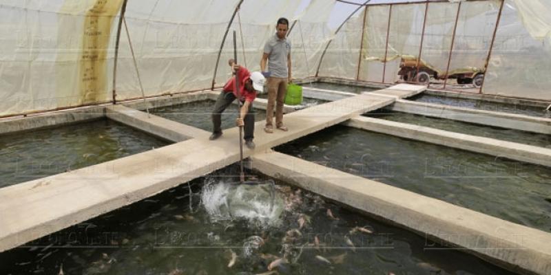 Aquaculture: La continentale fait mieux que la maritime