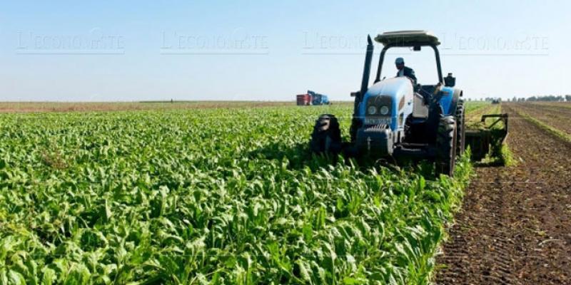 La production sucrière atteint un sommet historique
