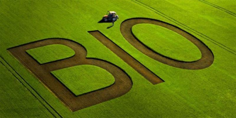 Agriculture: La Suisse veut développer le bio au Maroc