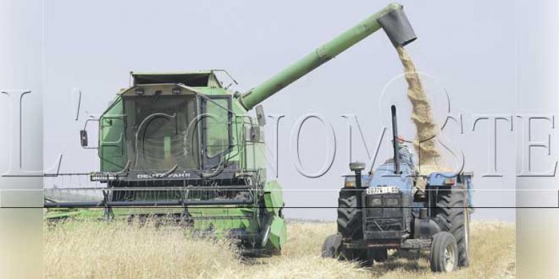 Comment Casablanca-Settat réalise plus de 15% du PIB agricole