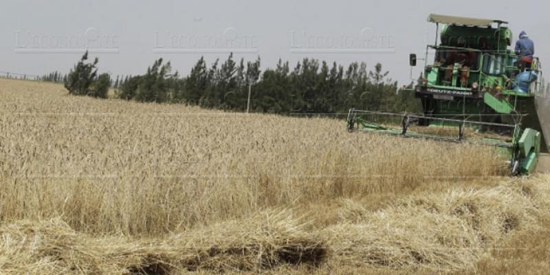 Campagne agricole Récolte record de 103 millions de quintaux